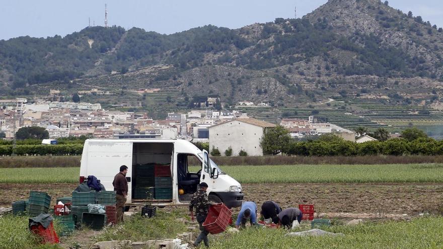 El paro sube un 8,48% en la Costera y un 9,18% en la Vall d'Albaida tras el primer mes completo del estado de alarma