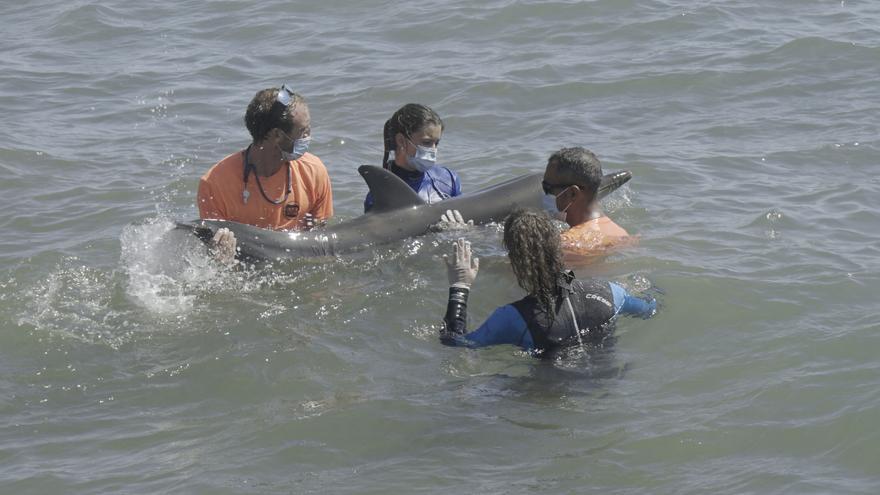 Asisten a un delfín varado en la playa de la Pobla de Farnals