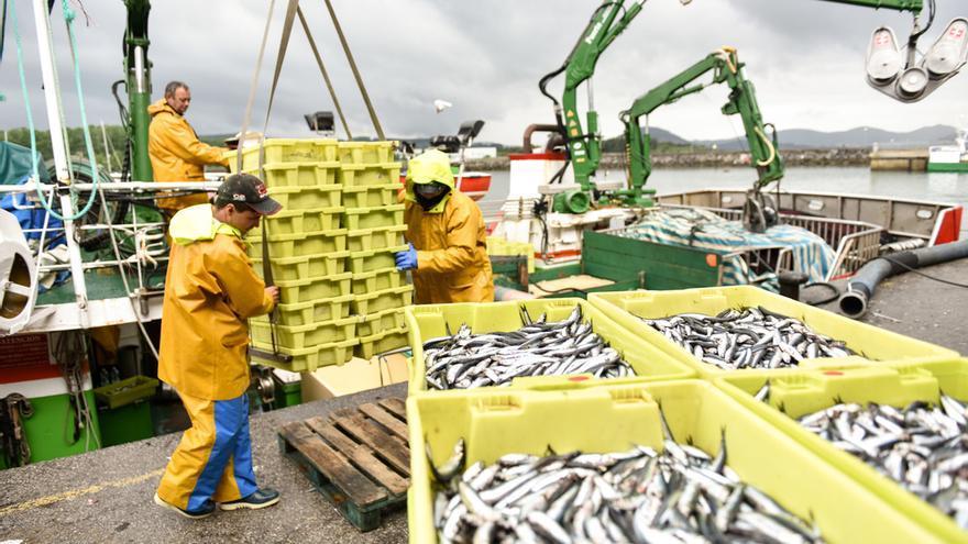 El Gobierno anuncia el cierre de la pesca de anchoa para mañana en el Cantábrico
