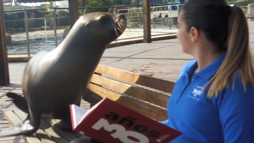 El Dia del Llibre, junto a los animales del Oceanogràfic