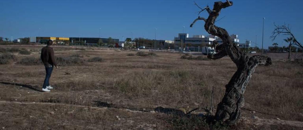 Elche ultima la compra de 90.000 metros en la zona de ampliación del parque industrial