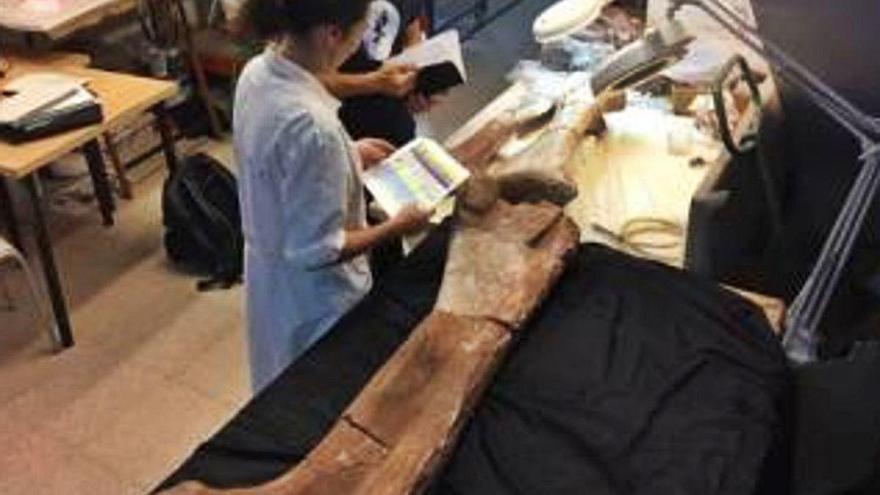 Las nuevas pistas de los restos del dinosaurio de Níger del MUPE
