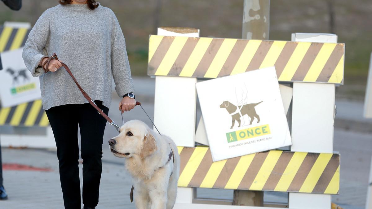 Servicios Sociales regula la utilización de perros para los enfermos crónicos.