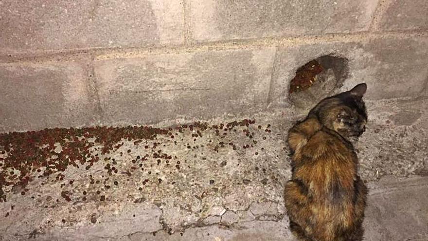 """La proliferación de gatos callejeros en Benavente, """"un problema de salud pública"""""""