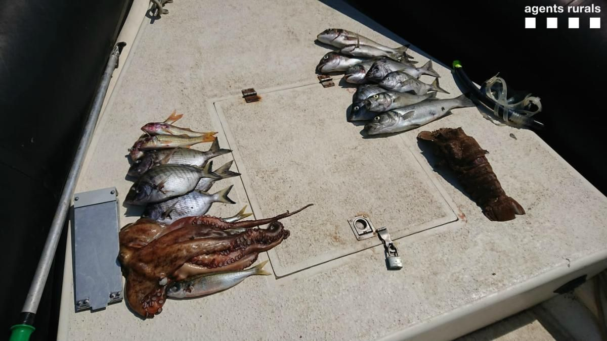Les captures que havien fet els pescadors en el moment de ser enxampats.