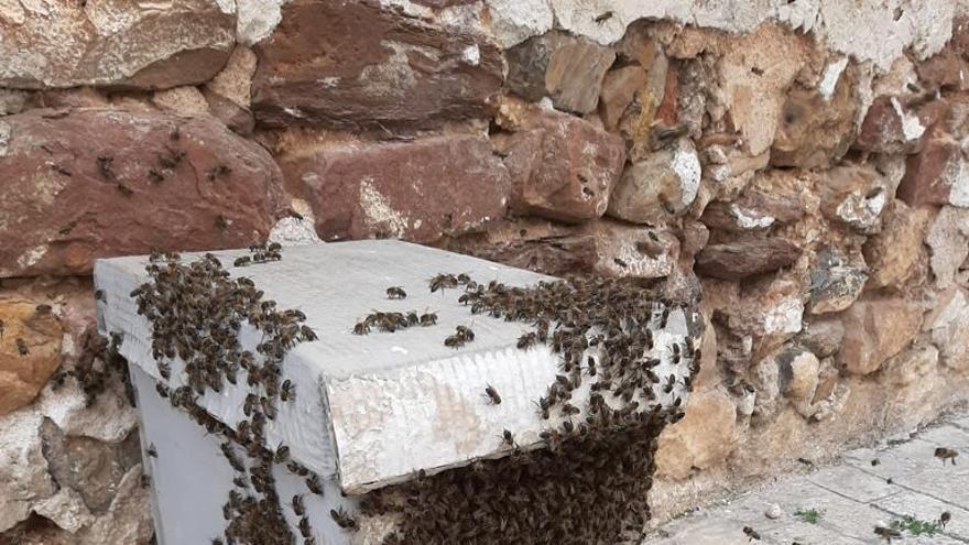 Proliferan las abejas en la Plana Baixa