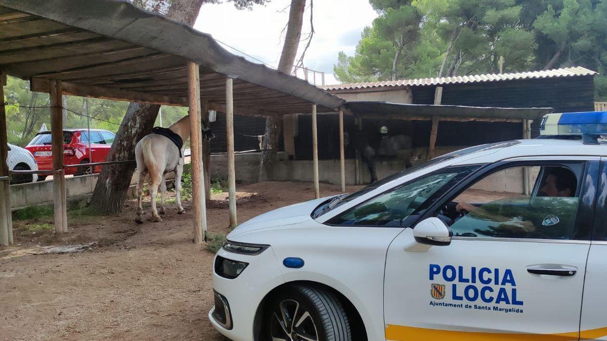 El caballo fue trasladado a un rancho.