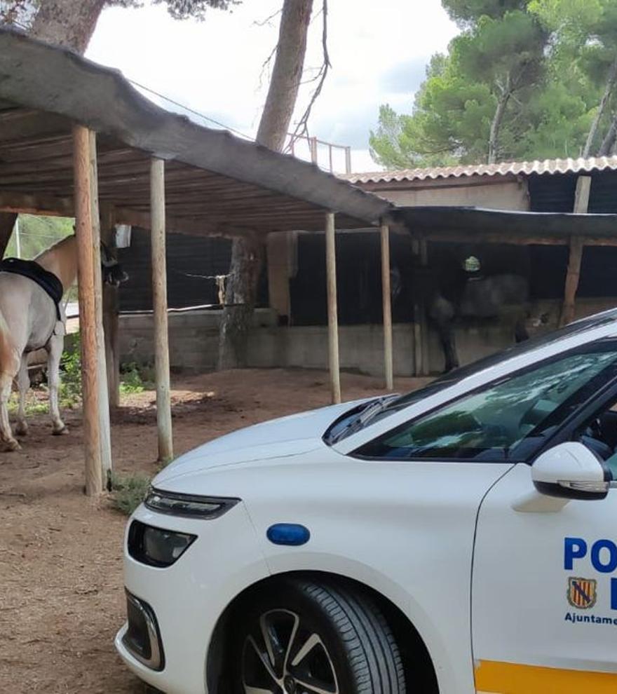 Denunciado un hombre por intentar arrollar a varias personas con un caballo en Mallorca