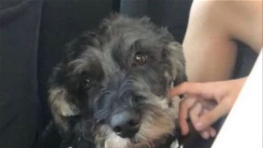 El perro de la familia implicada en el accidente de la A-52, sin aparecer