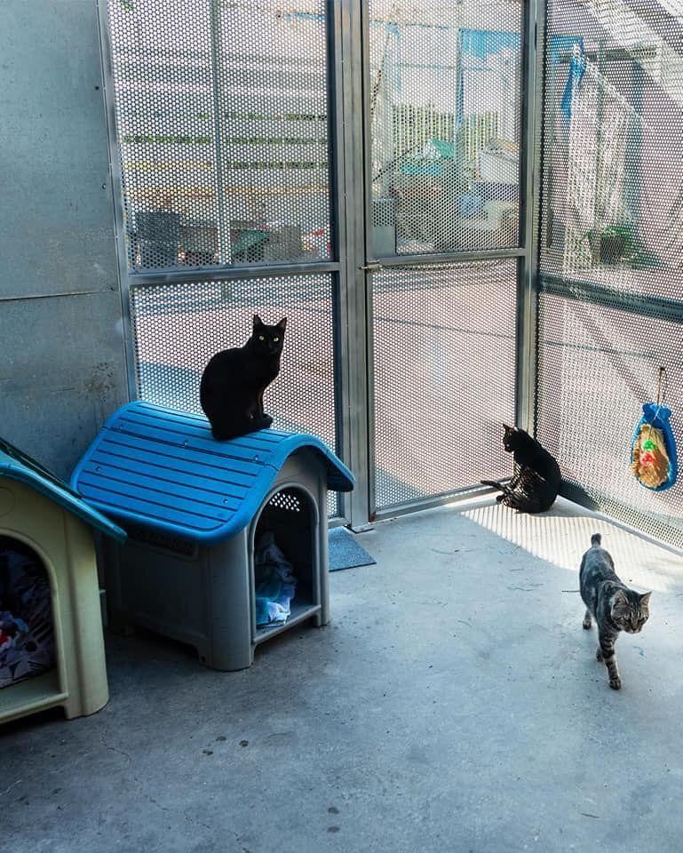 Así es el nuevo espacio para gatos en la Protectora