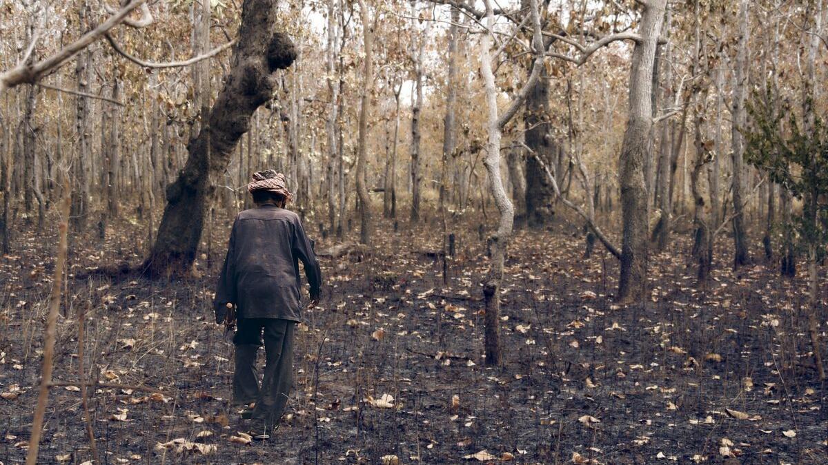 El planeta, en jaque: los bosques tropicales absorben cada vez menos CO2