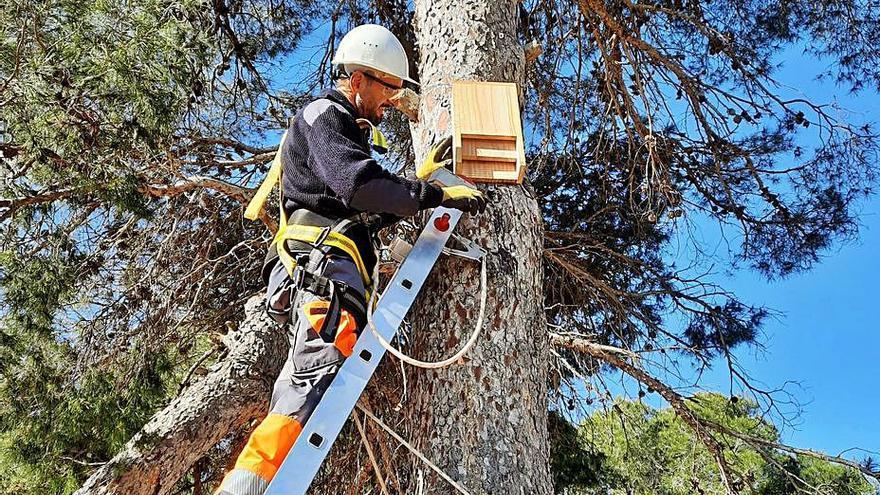 Rojales instala nidos para aves que atajen al mosquito y el tomicus