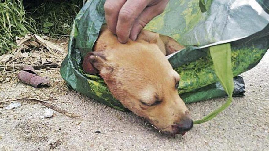 Einjährige Haftstrafe für mutmaßlichen Tierquäler auf Mallorca gefordert