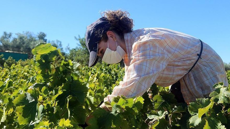 Agricultura da luz verde a los contratos-tipo de compra y venta de uva