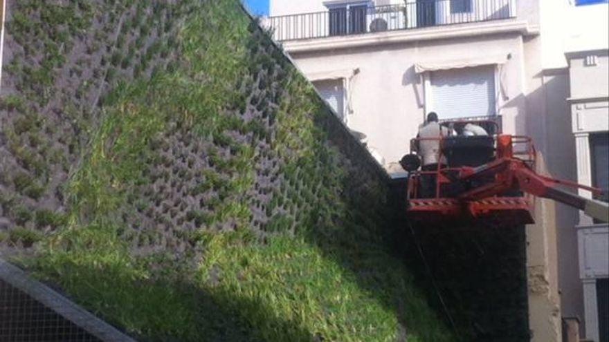 Elche quiere apostar por las azoteas verdes y los jardines verticales