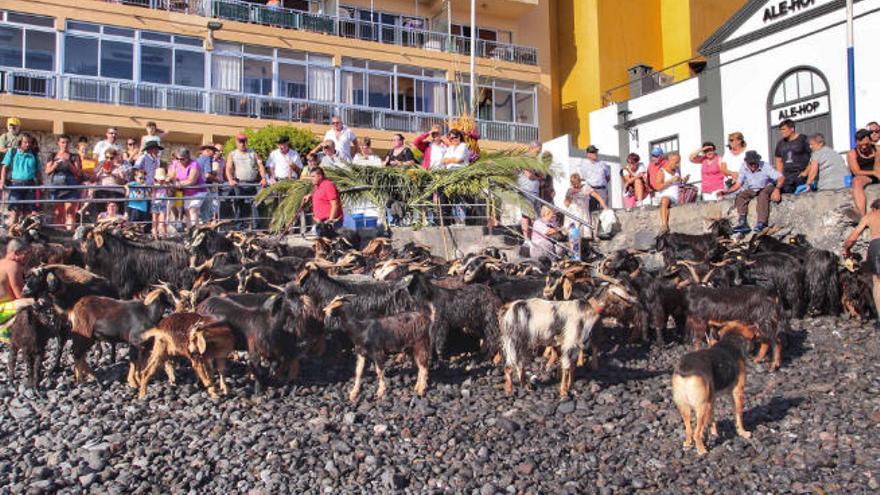 Inician una campaña para tratar de ilegalizar el baño de las cabras