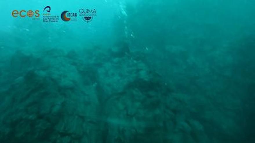 La Ulpgc graba imágenes submarinas del delta que forma la lava en La Palma