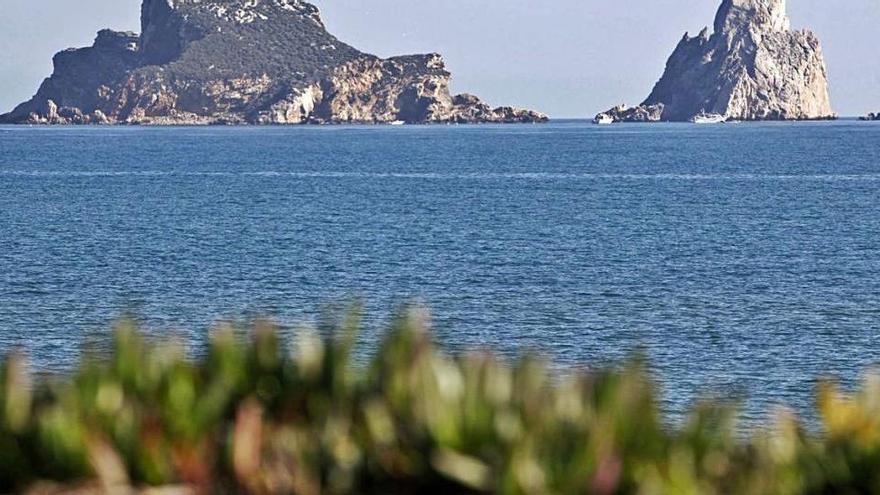 Girona perd uns 15.000 ocells aquàtics hivernants en l'última dècada