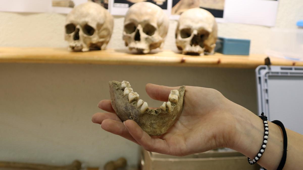 En primer pla una mandíbula descoberta al jaciment de Queralbs (Ripollès) i amb cranis de fons en una imatge publicada el 30 de juliol del 2021 (Horitzontal)
