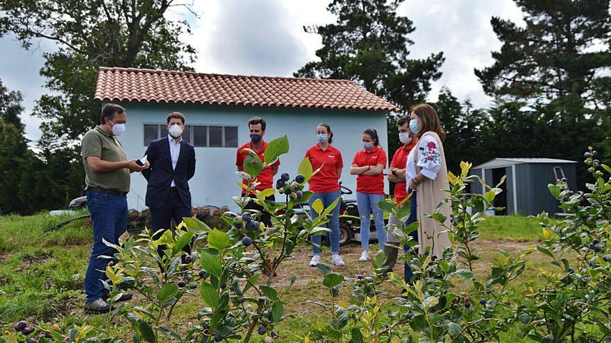 Villaviciosa utilizará sus plantaciones de frutos rojos como reclamo turístico en verano