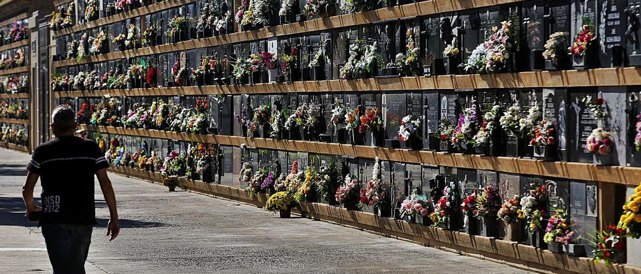 Una persona camina por el cementerio de València el día 1 de noviembre.   EDUARDO RIPOLL