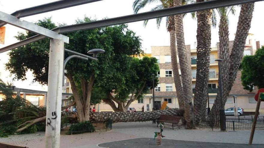 Se desploma una palmera en un parque infantil lleno de niños en Beniel