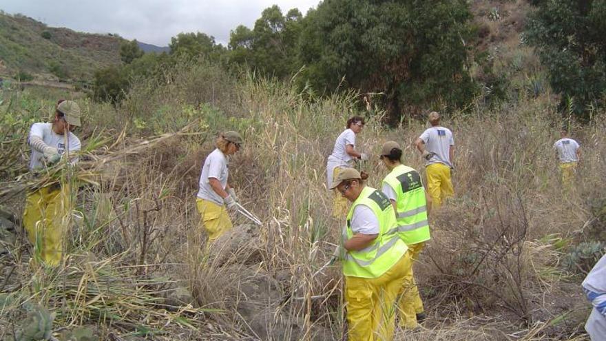 El plan de empleo del Cabildo contra el cambio climático crea 123 contratos
