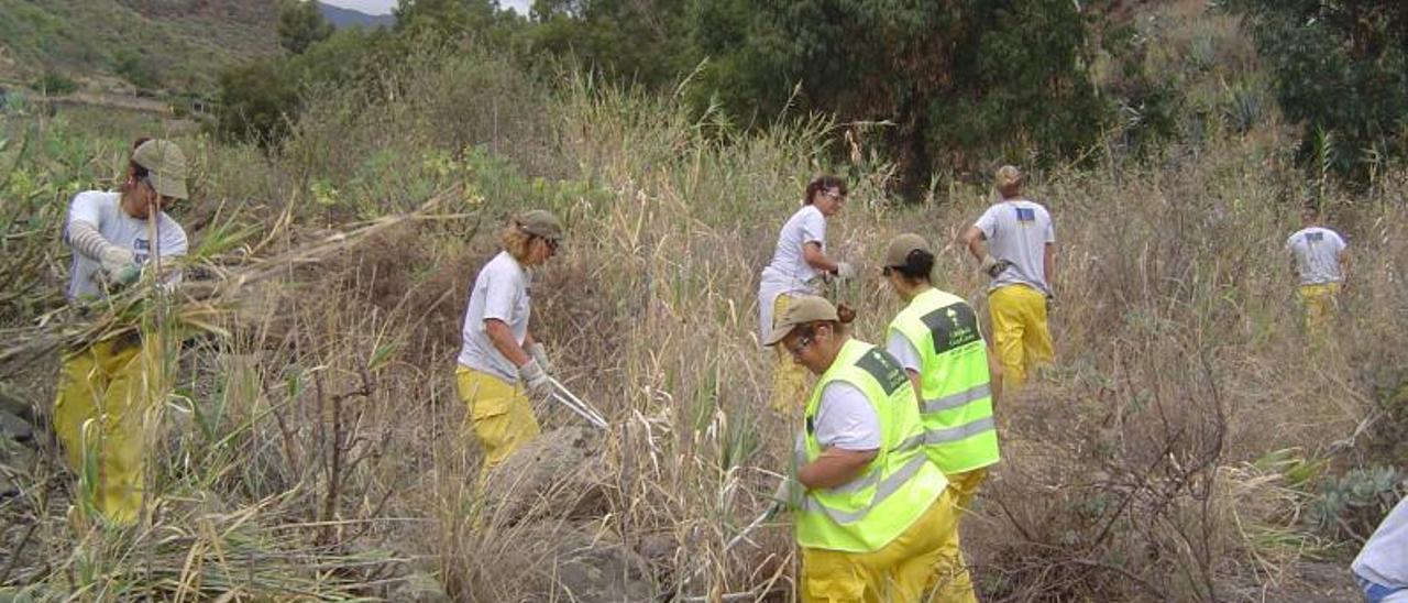 Trabajadores de uno de los programas de empleo del Cabildo de Gran Canaria. | | LP/DLP
