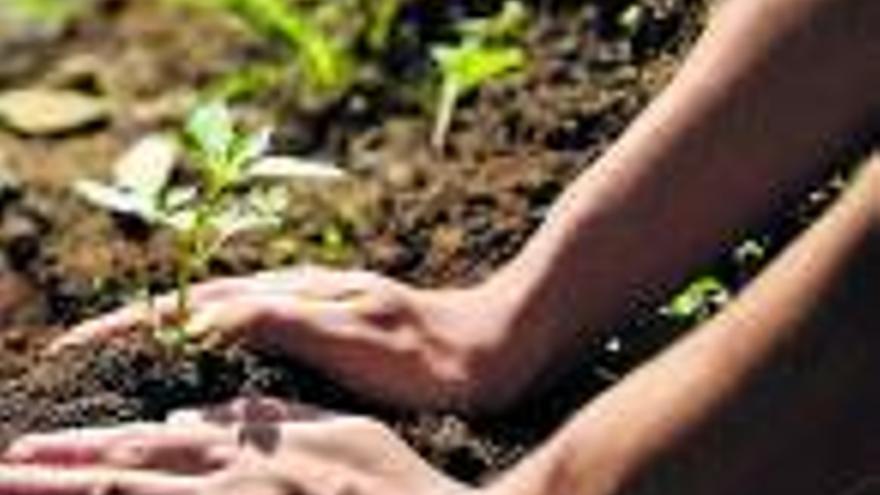 Banco Sabadell ayudará a plantar  100.000 árboles junto con Mastercard