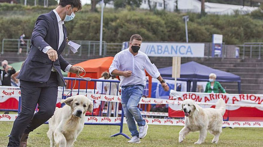 La FIG albergará una exposición canina los días 10 y 11 de julio
