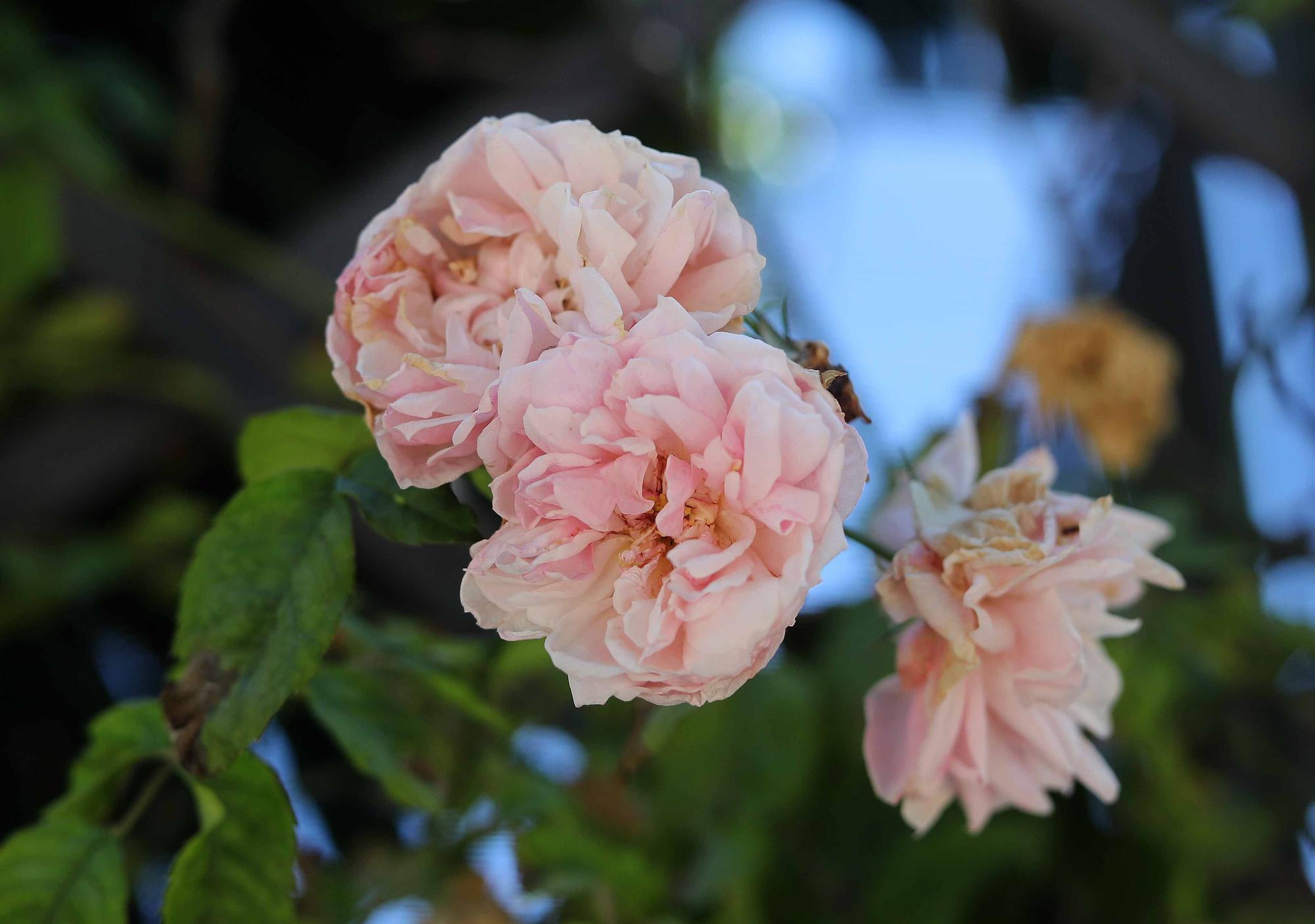 Las flores del Jardín Botánico en primavera