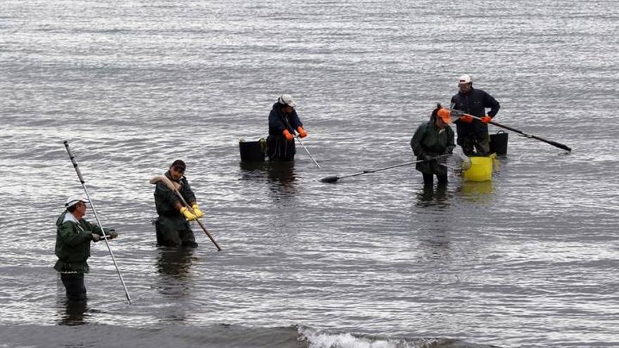 Las mariscadoras regresan a la playa de Arealonga