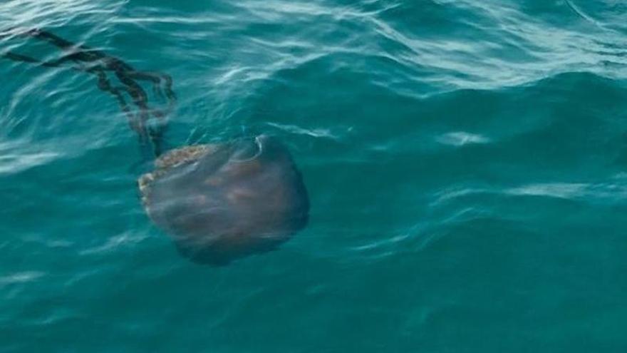 Encuentran una medusa gigante en Es Trenc