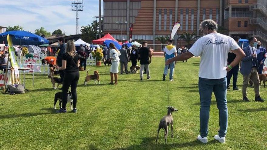 La exposición canina cambia Ifeba por las instalaciones de La Granadilla