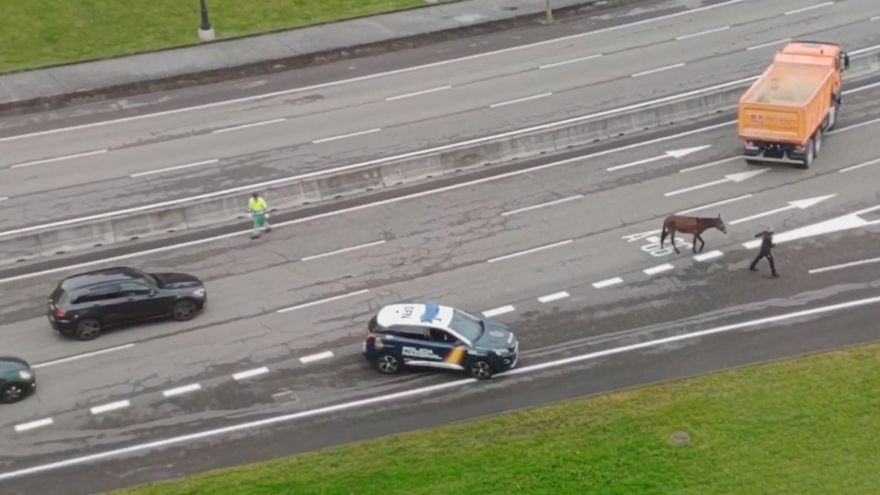 Una mula interrumpe el tráfico en la Ronda Sur de Oviedo