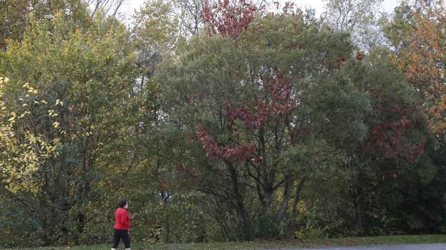 Los árboles eliminan cada año en la ciudad 441,5 kilos de contaminación atmosférica