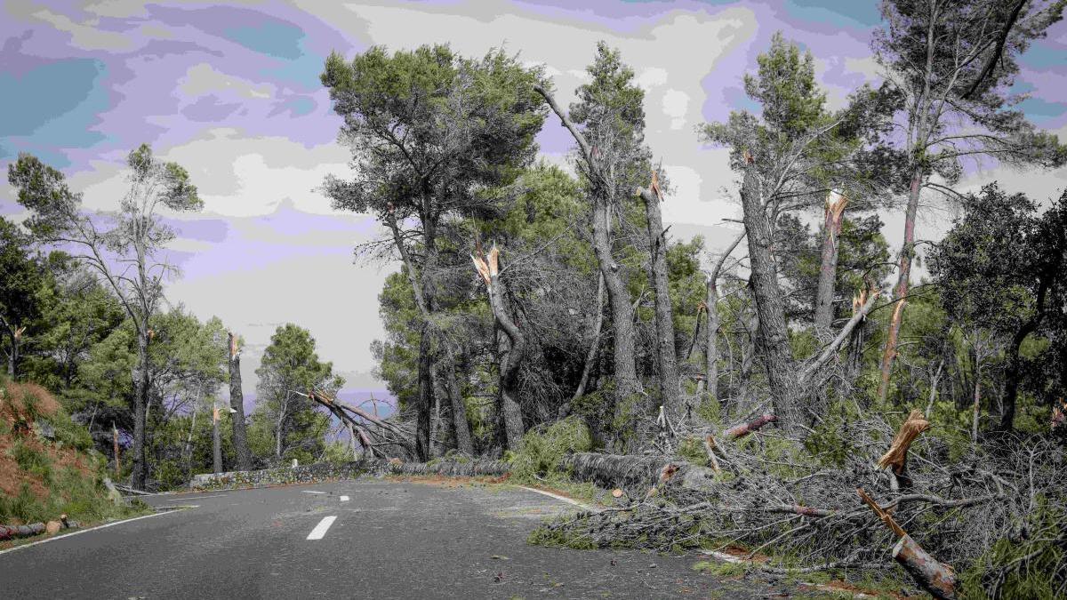 Así quedó la carretera que va a Banyalbufar tras el cap de fibló.