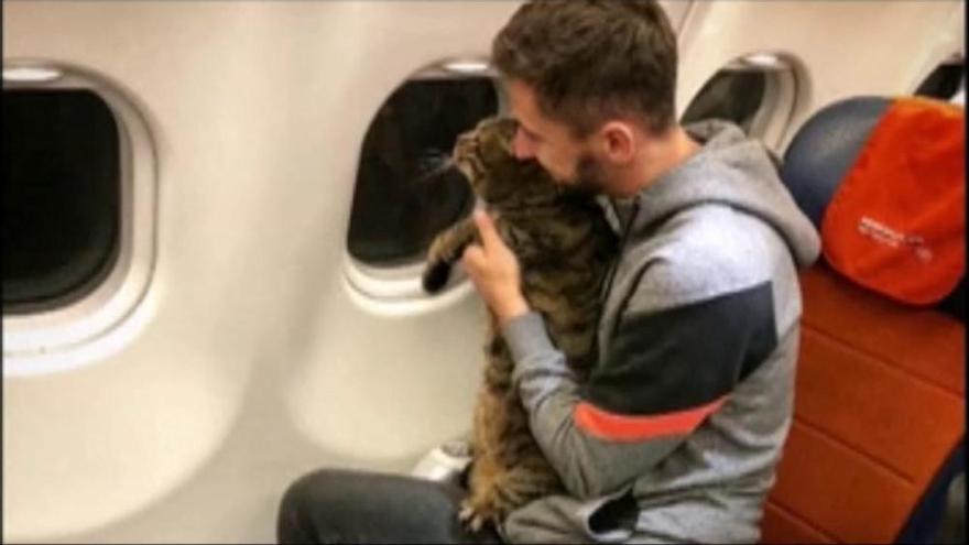 Aconsegueix dur el seu gat amb sobrepès dalt d'un avió tot i el veto de la companyia