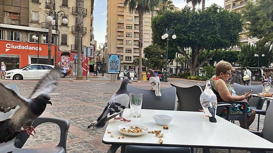 Alzira reclama a los vecinos que dejen de alimentar a las palomas urbanas