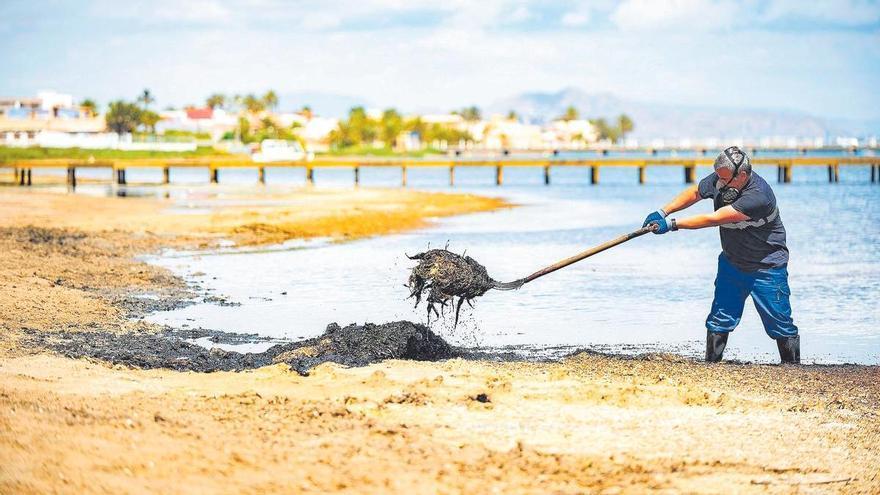 La temporada de baño en el Mar Menor comienza con dos playas 'suspensas'