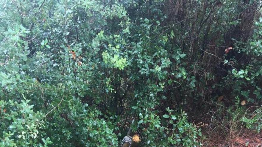 Els «Natus» alerten de danys a les basses temporals per protegir la biodiversitat