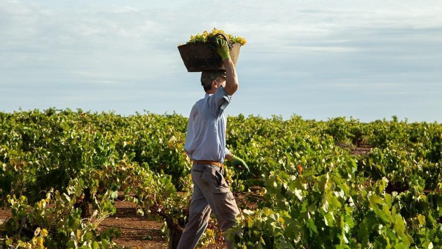 Los agricultores de Tierra de Barros piden un precio justo en la liquidación de la uva