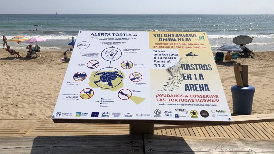¿Qué hacer si te encuentras una tortuga boba en las playas de Elche?