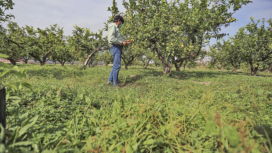 Alicante lidera la agricultura ecológica en la Comunidad con 90.000 toneladas