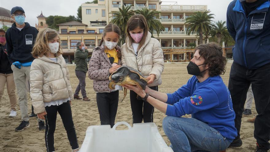 Sueltan tres tortugas en la playa del Voramar de Benicàssim