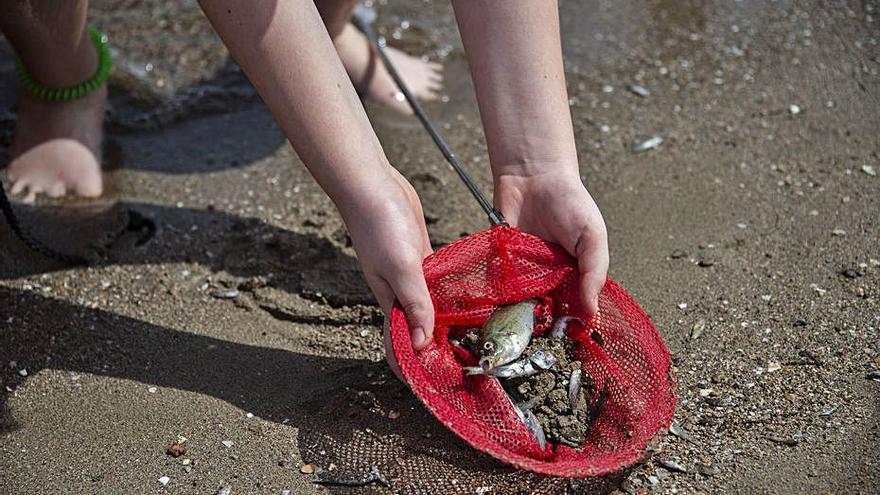 Ecologistas piden una investigación sobre la mortalidad en el Mar Menor