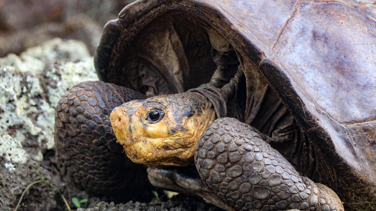 La tortuga que se creía extinta hace más de un siglo
