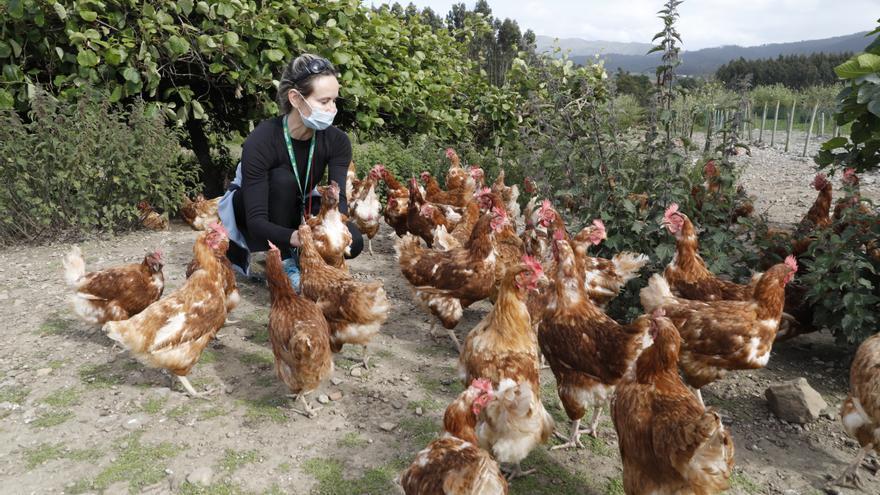 La criadora de gallinas de Castrillón que vio en el huevo casero la vía a la independencia