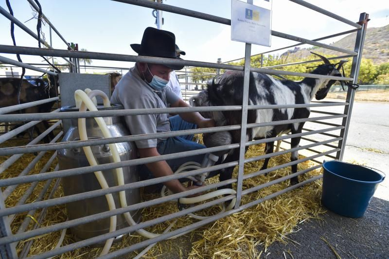 Feria y concurso de Ganado de Gran Canaria
