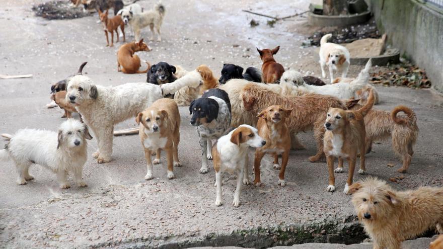Los perros huérfanos crecen por el Covid-19